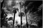 stormypark_p.jpg